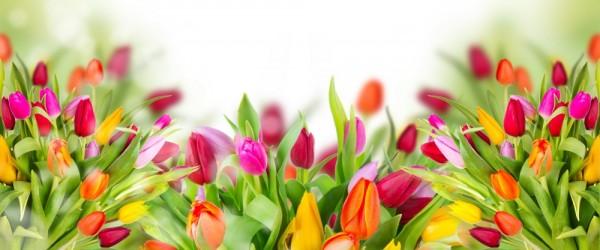 dialogue-tulips